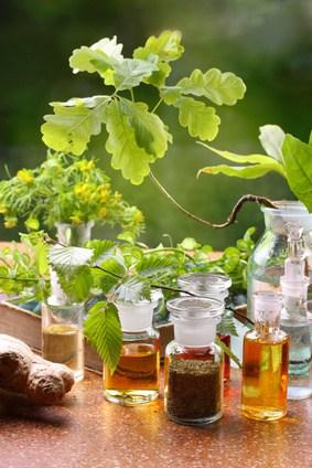 Pflanzenheilkunde und Phytotherapie geschichte