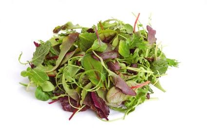 Salat aus kräutern - Zutaten für den Kräutersalat