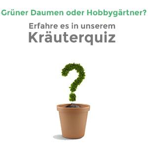Kräuterquiz Startseite teaser