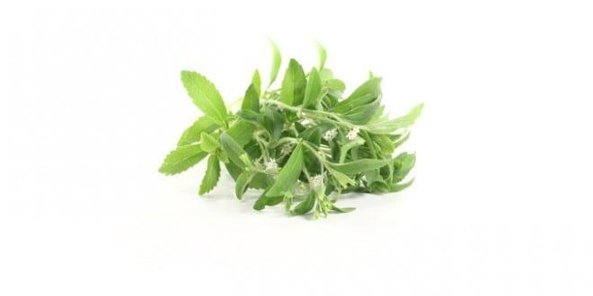 nat rliche s ungsmittel stevia als alternative zum zucker. Black Bedroom Furniture Sets. Home Design Ideas