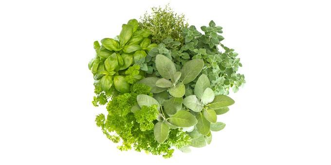 Natürliche Pflanzen, die zum Abnehmen dienen
