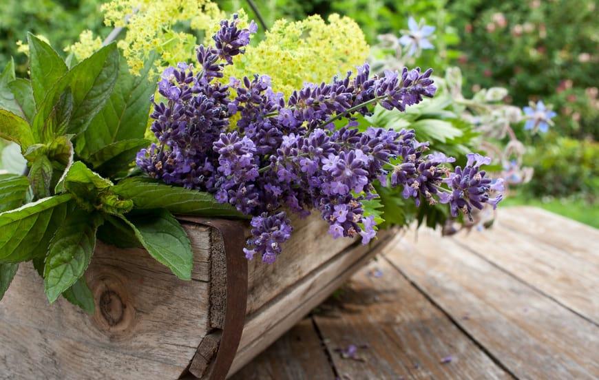 Kräuter Im Blumenbeet Anpflanzen Alles über Mischkulturen