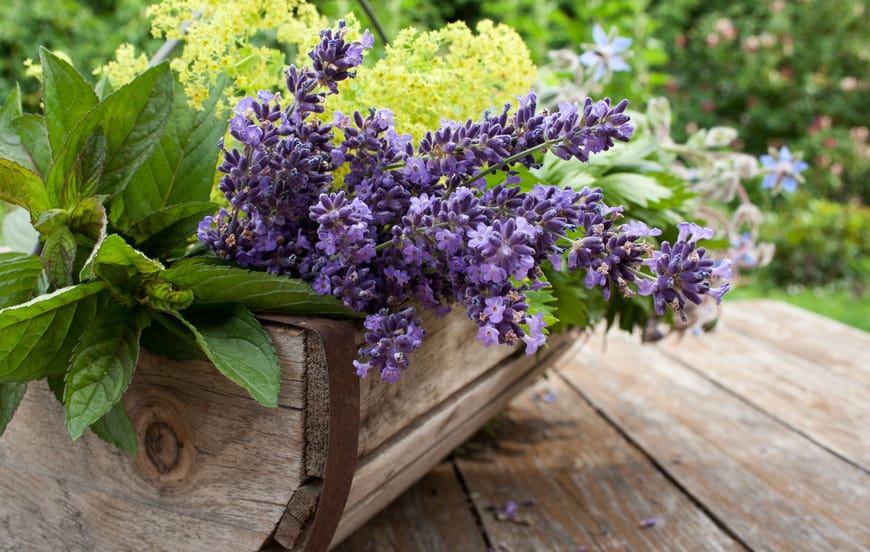 Kräuter richtig anpflanzen als Mischkultur