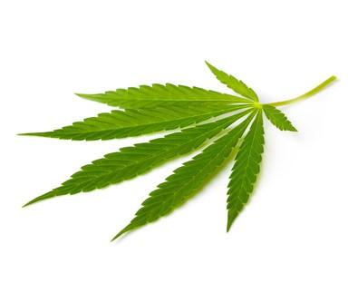Cannabispflanze als Heilmittel