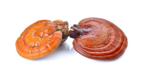 Reishi Pilz Anwendung