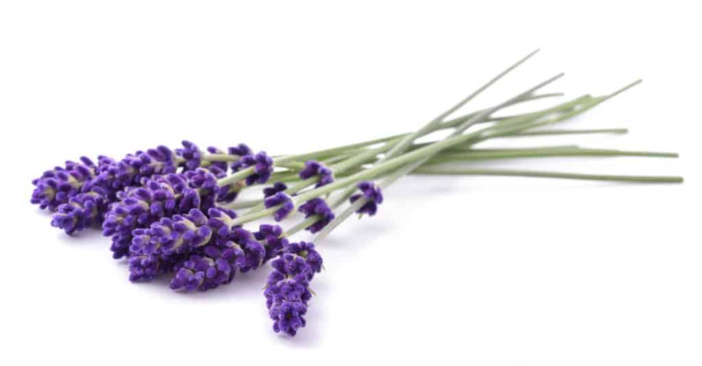 Lavendel bei Stress