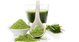 spirulina Alge Immunsystem